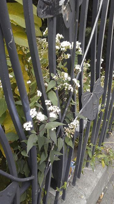 White outside Gate.jpg