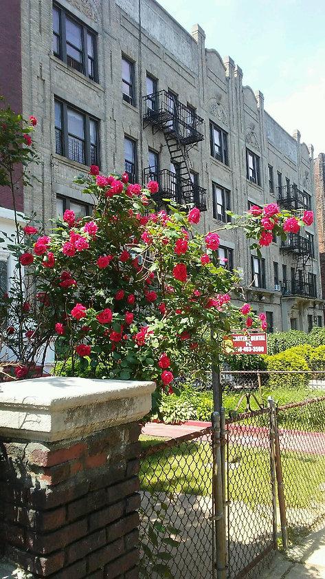 Tree of Roses Daylight.jpg