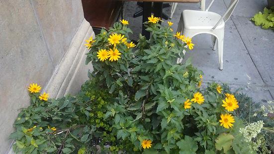Yellow Flowers 2.jpg