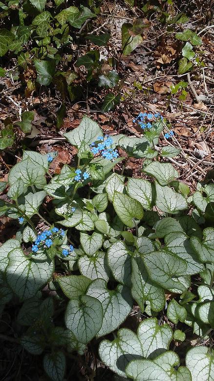Tiny Blue Flowers 1.jpg