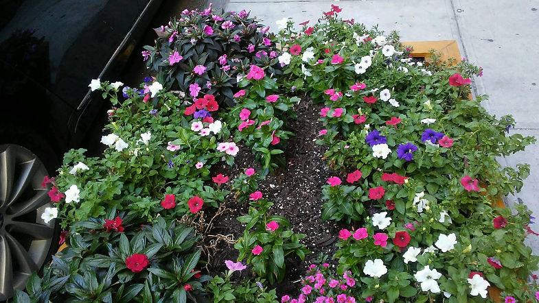 Sidewalk Flowers.jpg
