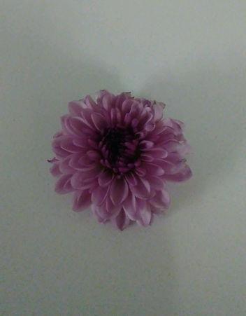 Purple Flower from Bouquet.jpg