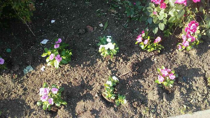 Light Shade Flowers 1.jpg