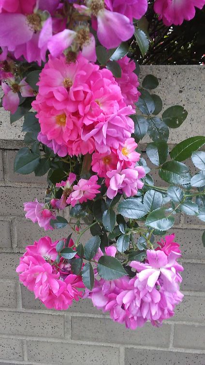 Pink Flowers 2.jpg