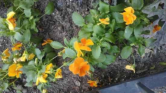 Yellow Flowers 1.jpg