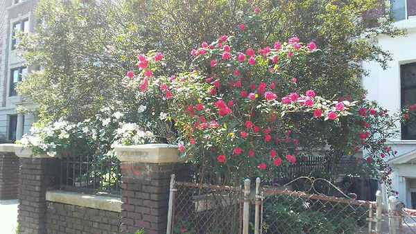 Bright Daylight of Flowers.jpg