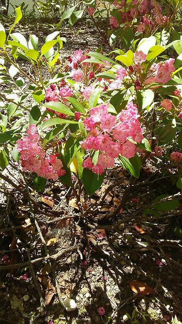 USSC Flowers 1.jpg