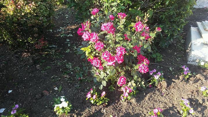 Light Shade Flowers 3.jpg