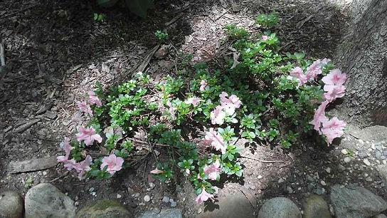 USSC Flowers 4.jpg