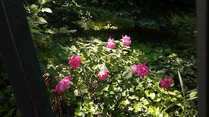 Shaded Hidden Flowers.jpg