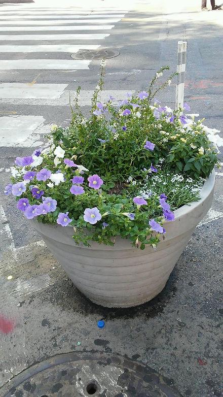 Union Sq. Pot Flowers.jpg