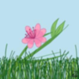 74. Sakura-Cherry Blossom.jpg