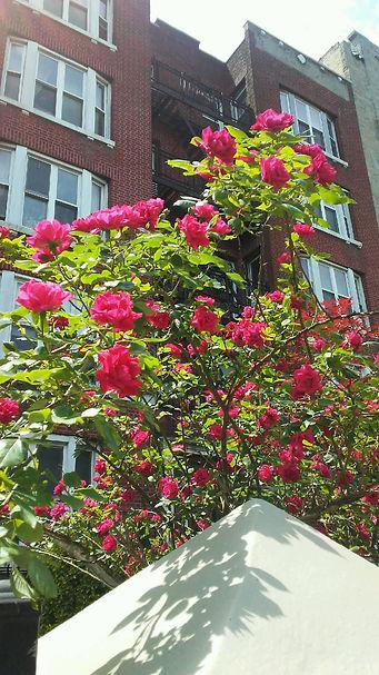Bright Roses on Top.jpg