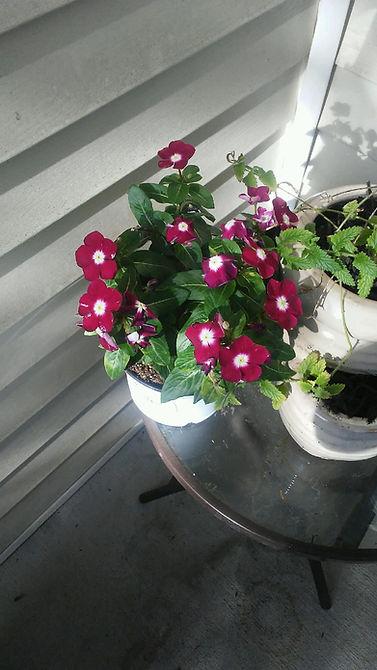 Porch Table Flowers 2.jpg