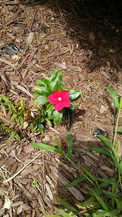 Red Baby Flower.jpg