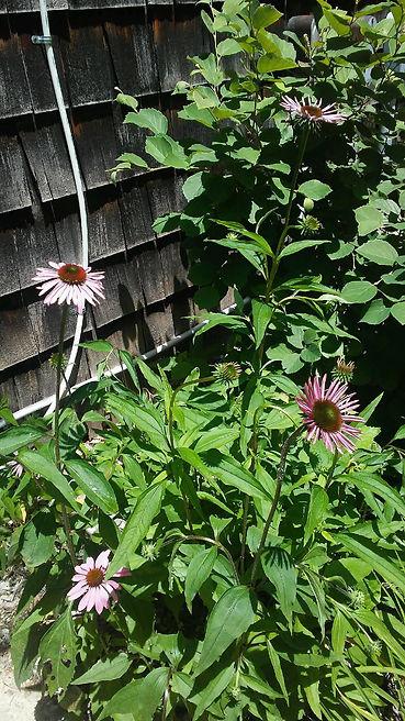 USSC Flowers 26.jpg