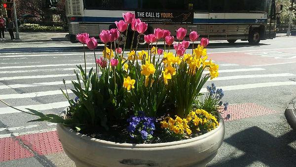 Sunlight Street Flowers.jpg