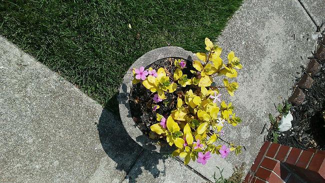 Pot of Flowers.jpg