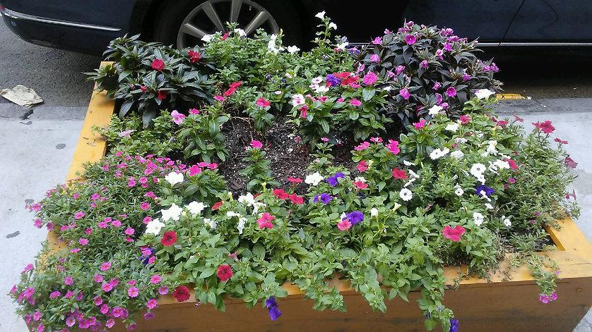 Sidewalk Flowers. 1.jpg