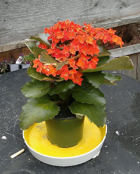 Orange Flowers on Table Close Up.jpg