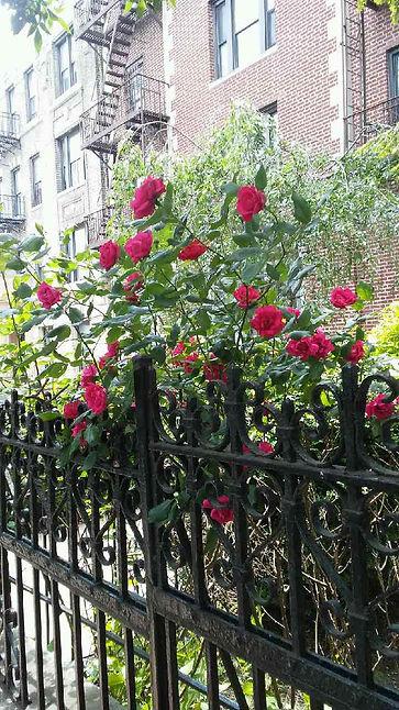 Rose Tree Gate Side View.jpg