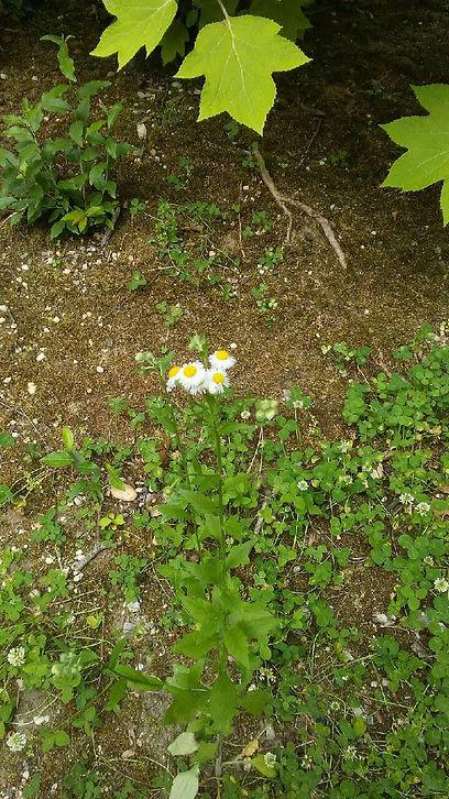 USSC Flowers 11.jpg