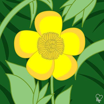56. Buttercup.jpg