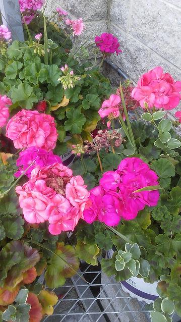 Walmart Flowers 3.jpg