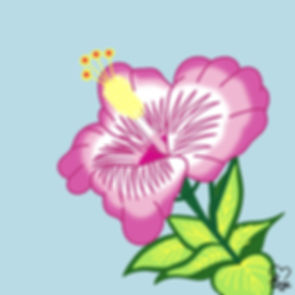 23. Pink Hibiscus.jpg