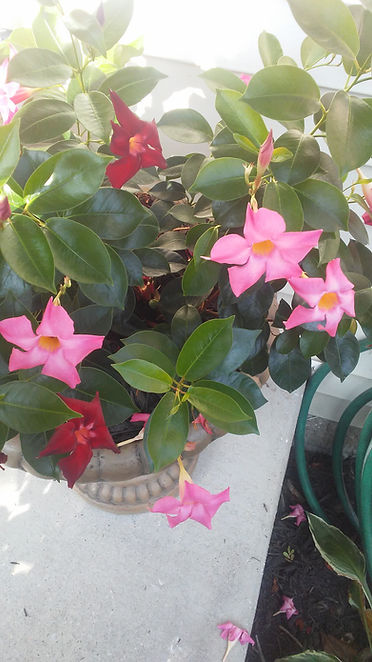 Dad's Porch Flowers 1.jpg