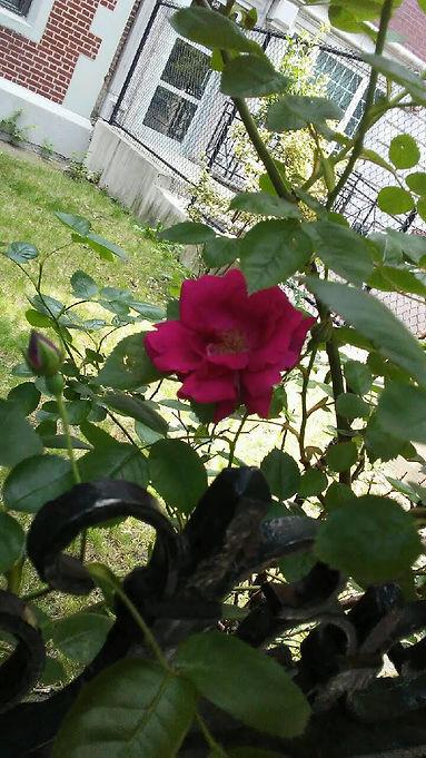 Single Shade Flower.jpg