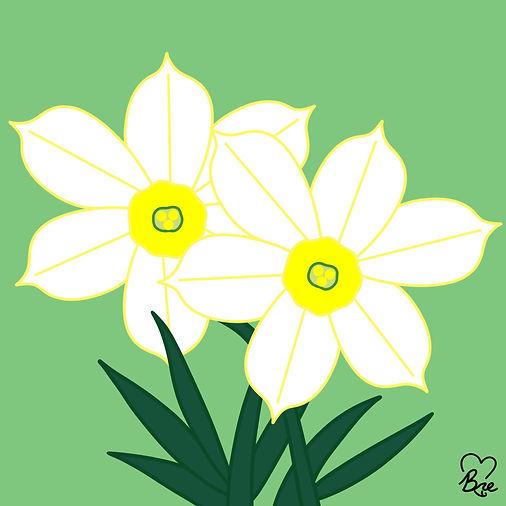 46. Daffodils-Narcissus.jpg