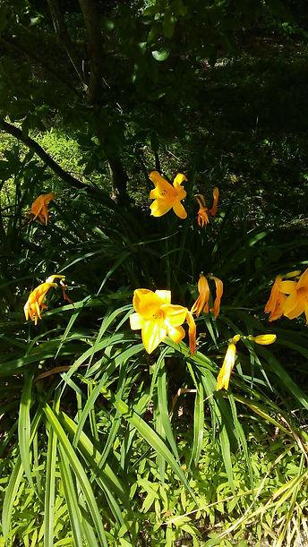 USSC Flowers 17.jpg