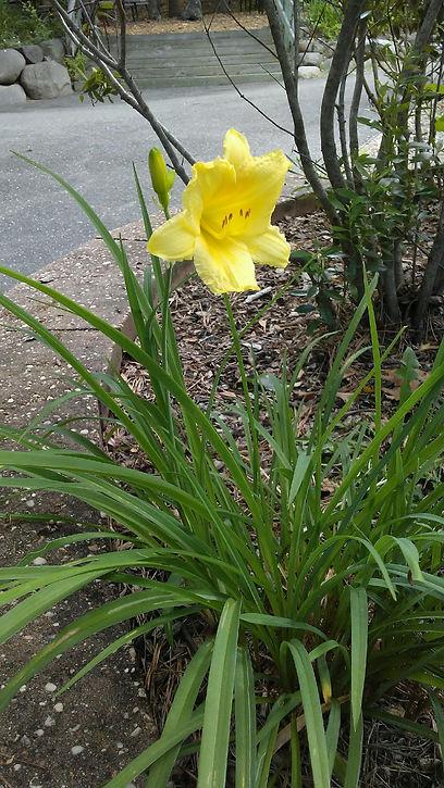 USSC Flowers 13.jpg