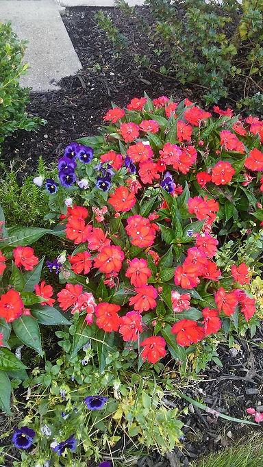Rockville Center Flowers 6.jpg