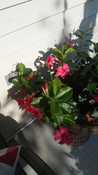 Dad's Porch Flowers 4.jpg