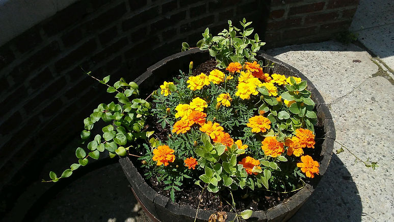 Yellow & Orange Flowers.jpg