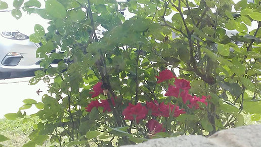 Red Flowers Close Up.jpg