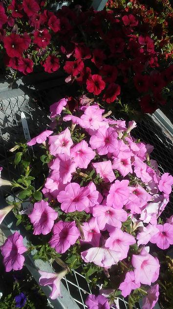 Walmart Flowers 4.jpg