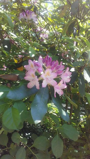 USSC Flowers 7.jpg