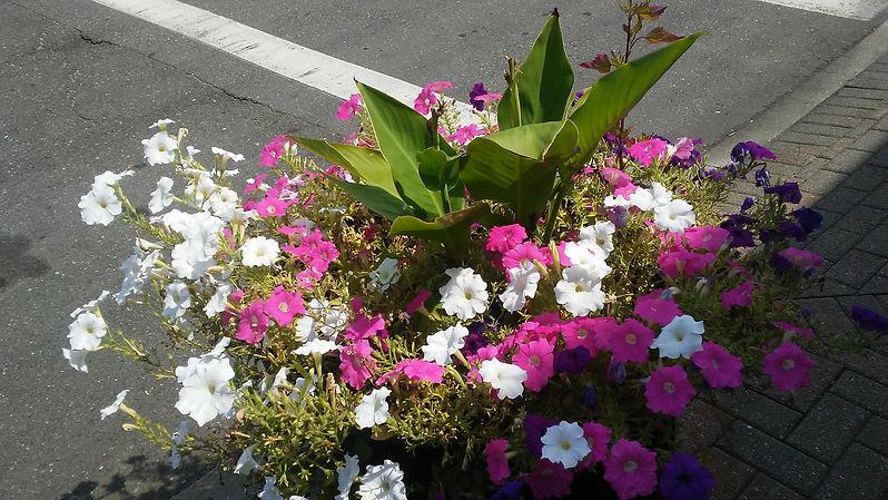 Rockville Center Flowers 2.jpg