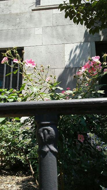 PinK Flowers Look Up.jpg