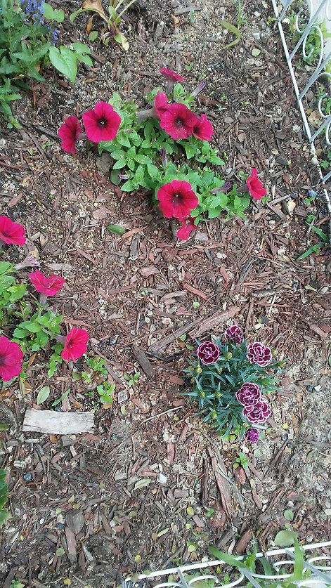 Flowers and Plants in Wood Chips 2.jpg