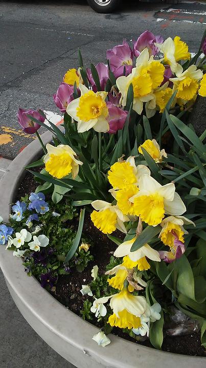 Mixture Pot Flowers 1.jpg