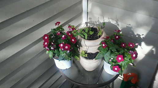 Porch Table Flowers.jpg