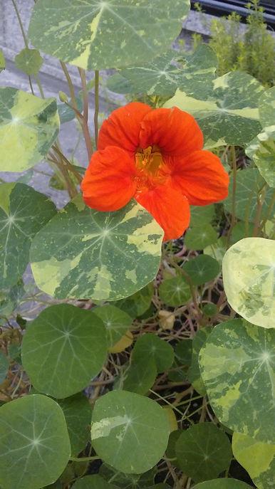 Orange Flower 1.jpg