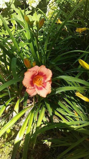 USSC Flowers 25.jpg