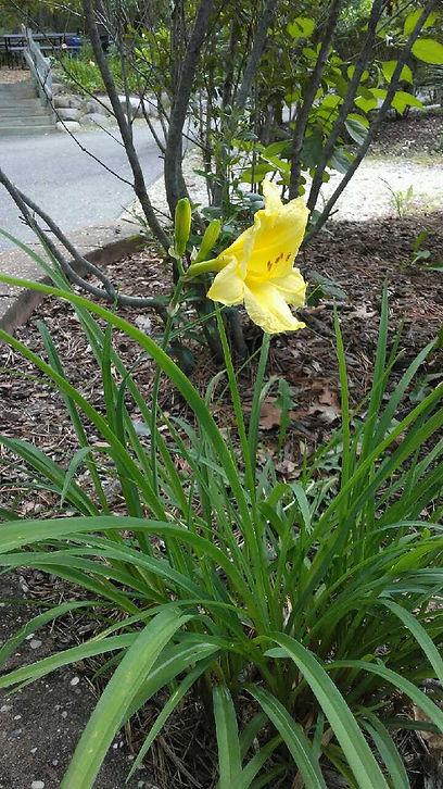 USSC Flowers 14.jpg
