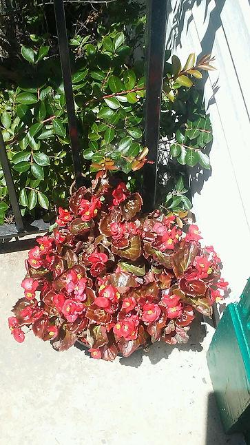 Red Porch Corner Flowers 1.jpg