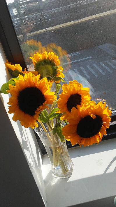 Sunflowers in Corner 1.jpg